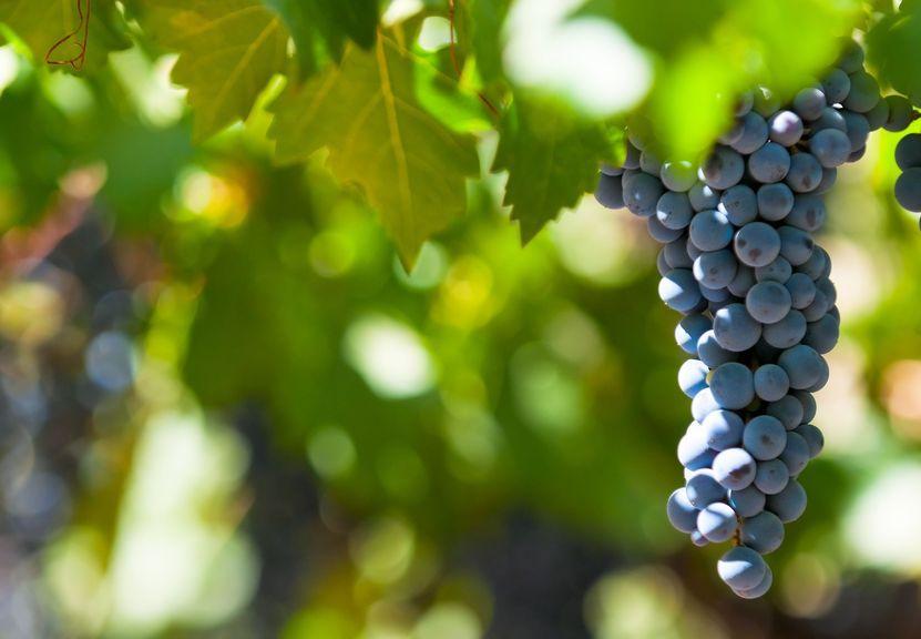 Mendoza er Argentinas vinbrønn.