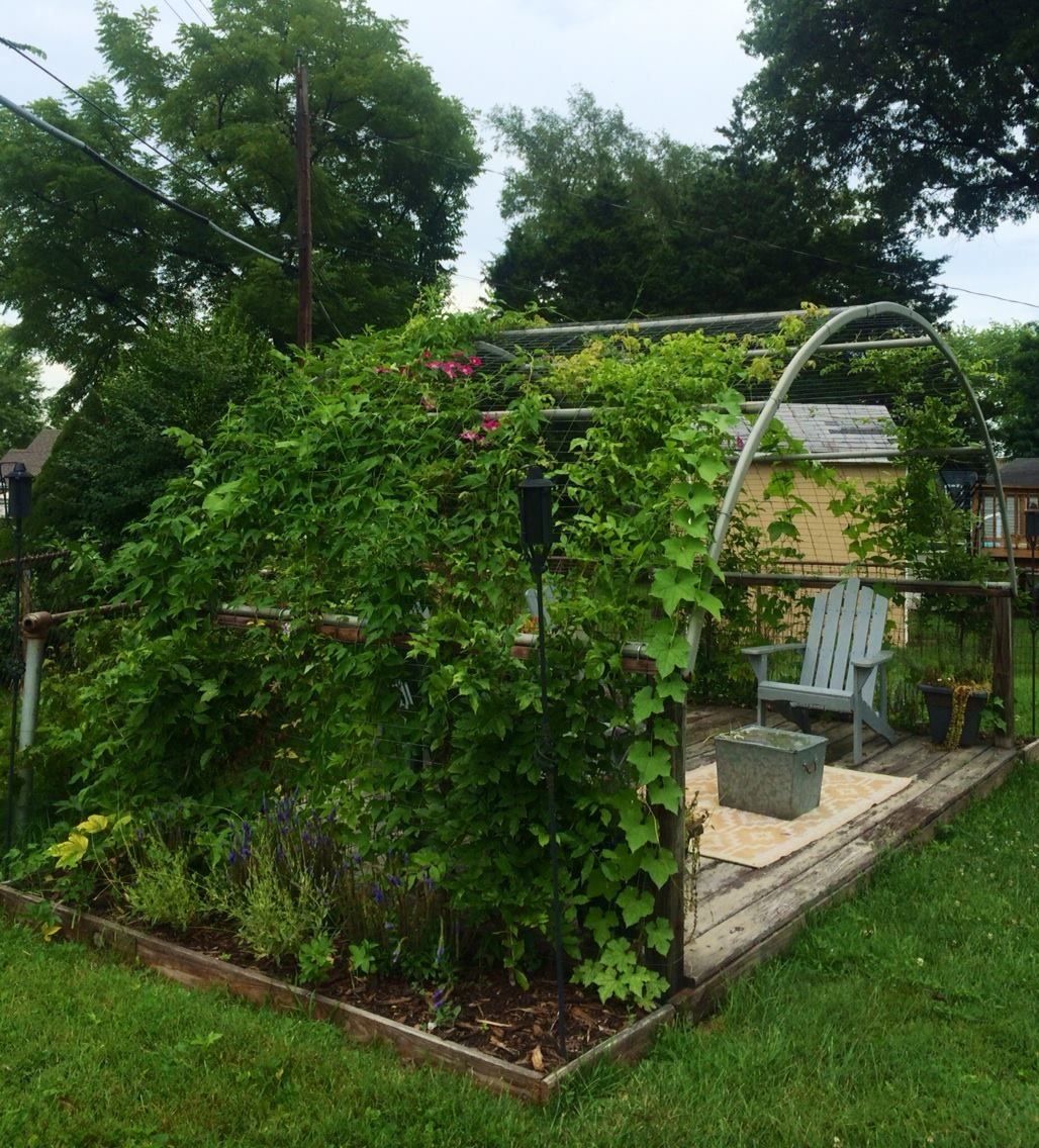 Re Purposed Trampoline Frame Makes A Beautiful Arbor For Wisteria To Cover Dill Thebeau Interior Design Outdoor Gardens Backyard Backyard Landscaping