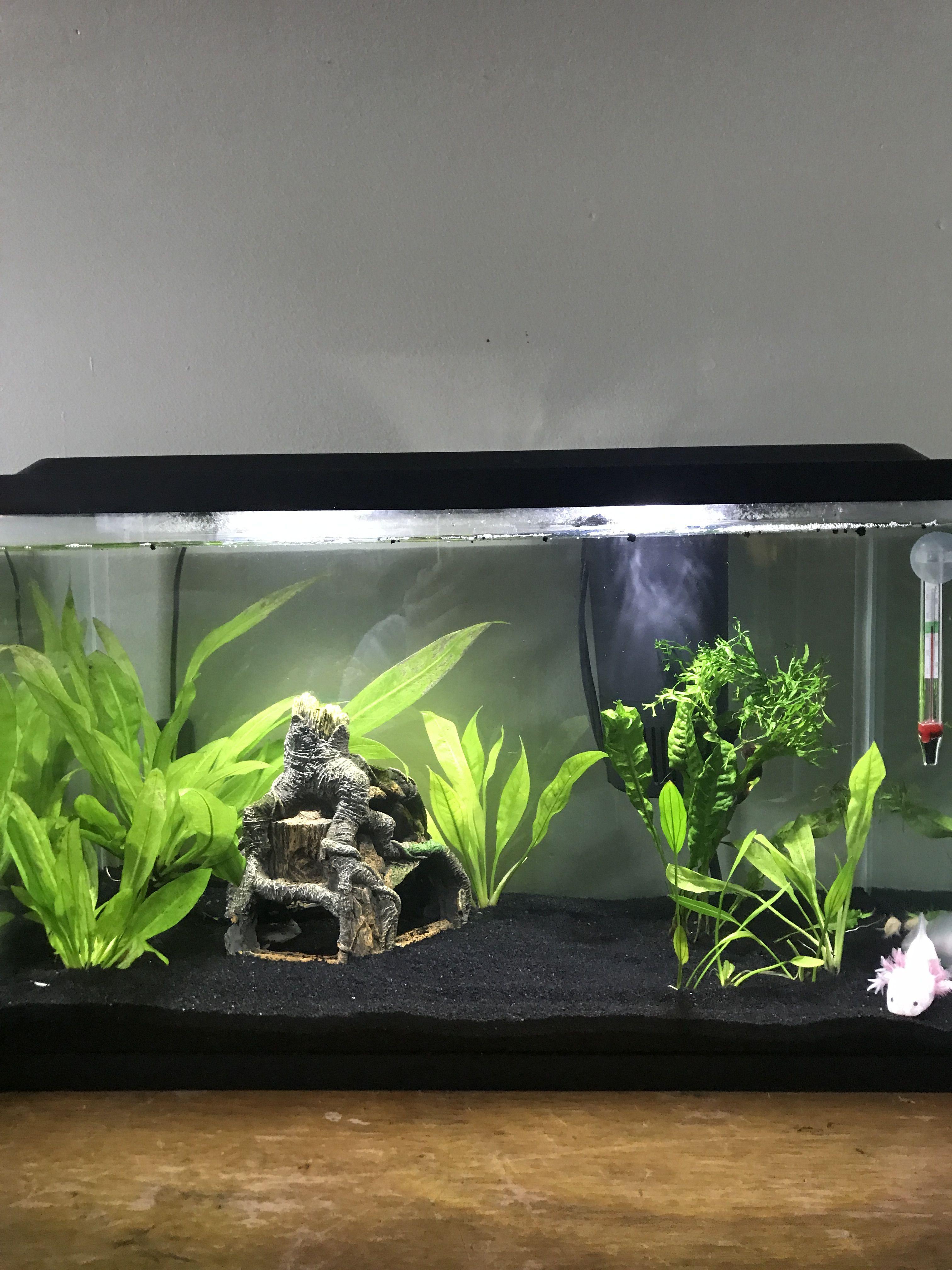 Axolotl Tank Fish Tank Themes Axolotl Tank Fresh Water Fish Tank