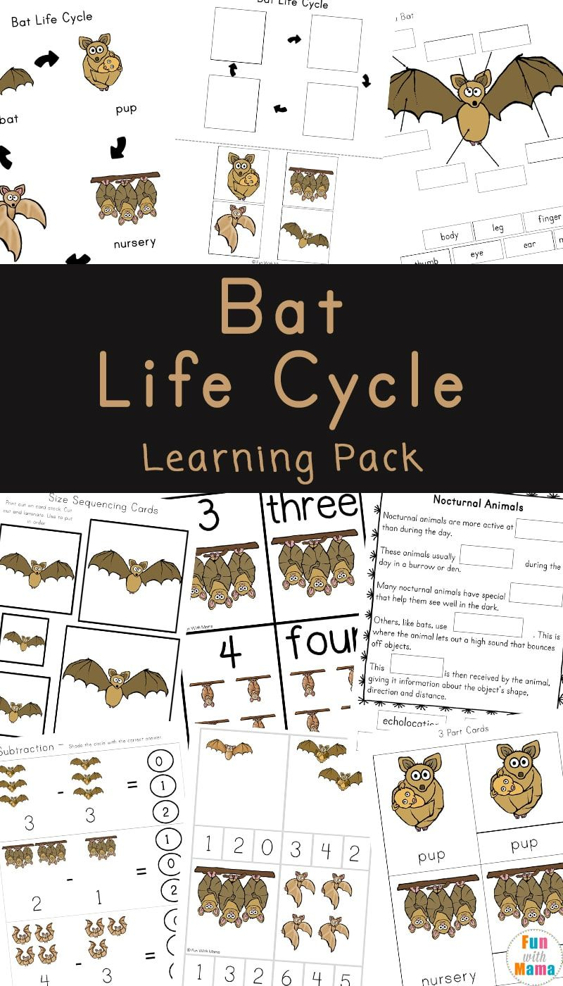 Bat Life Cycle Facts For Kids | Life cycles activities, Bat activities for  kids, Life cycles