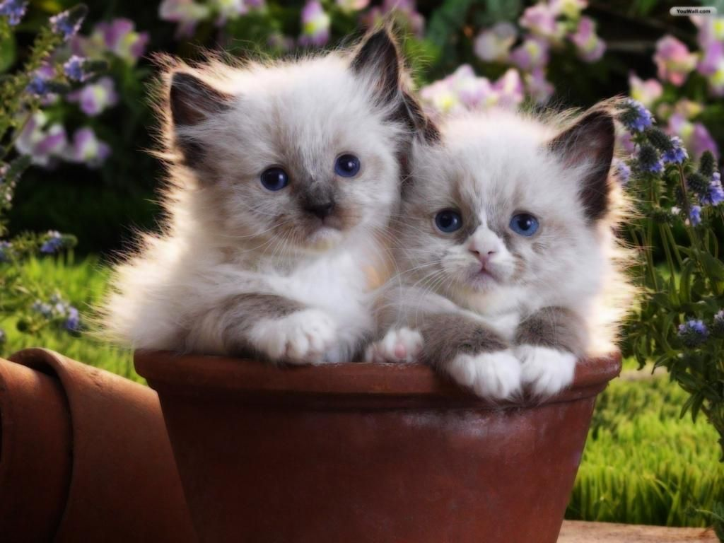 Gwendolyn On Twitter Kittens Cutest Kitten Pictures Cute Cats