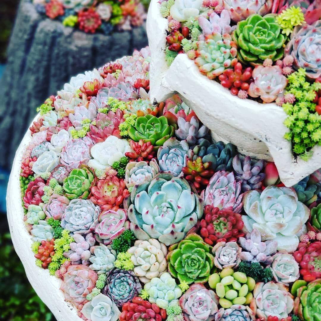 Immagini Piante E Fiori l'immagine può contenere: fiore, pianta e cibo   suculentas