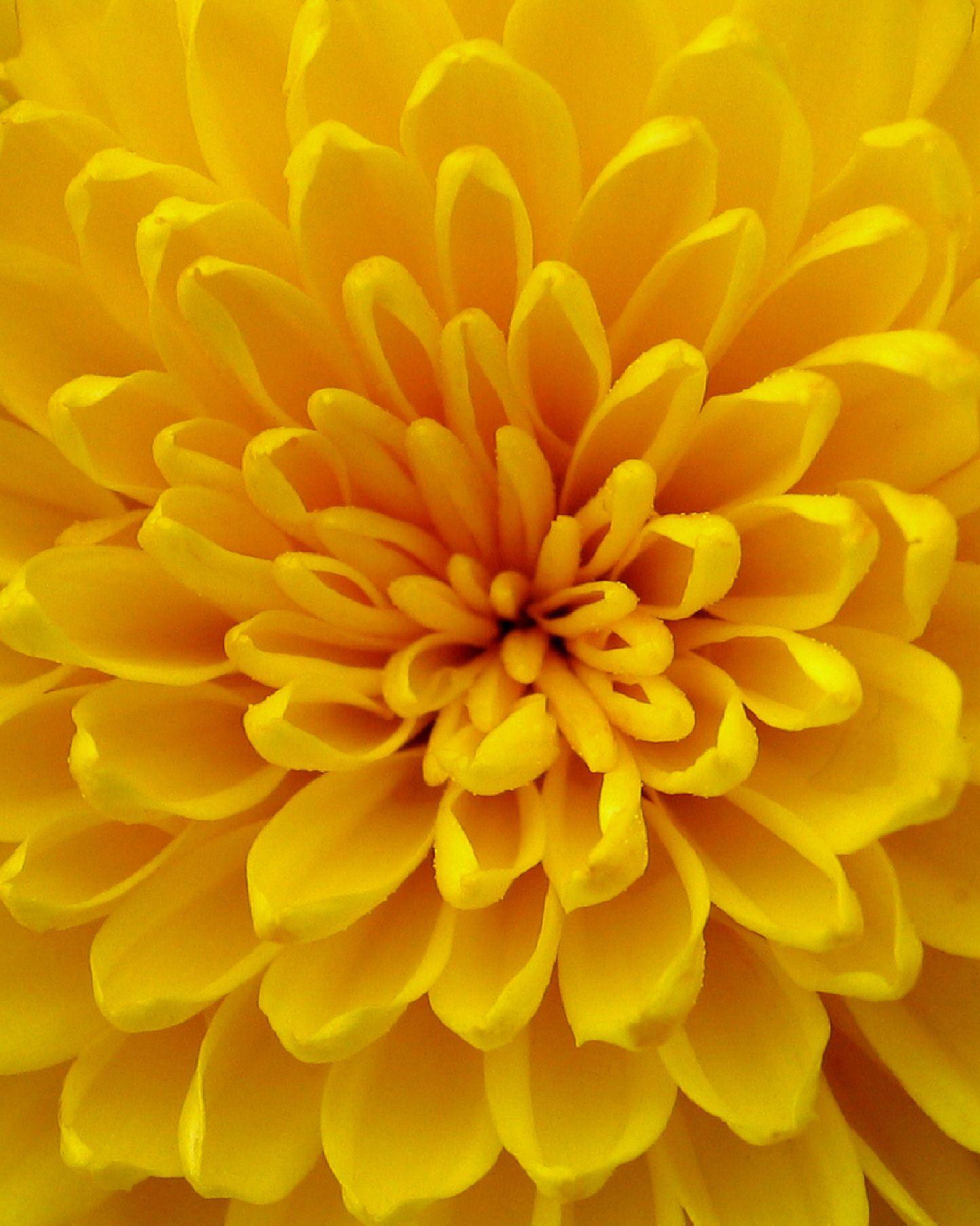 предлагаем желтые картинки смотреть сама роузи