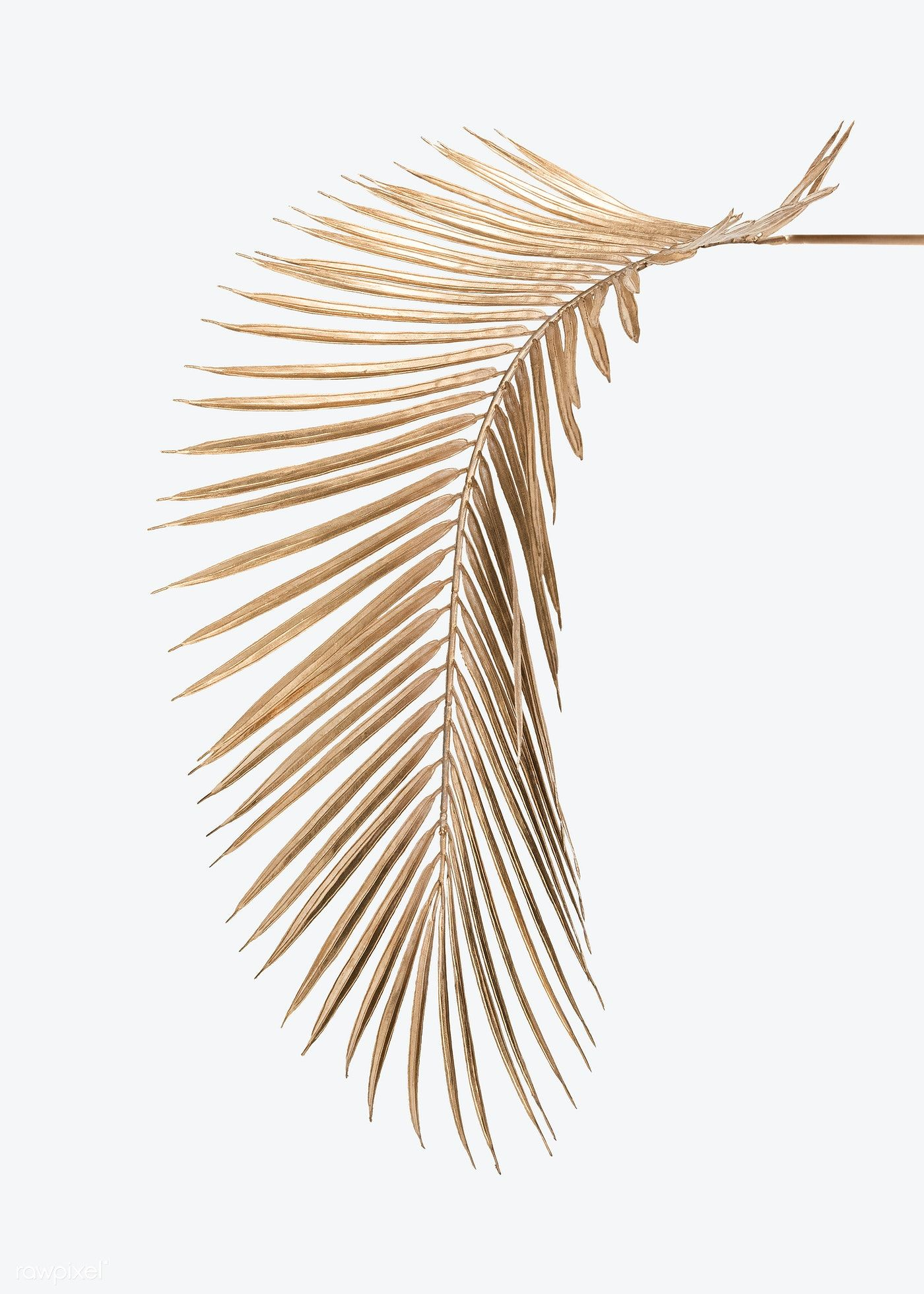 Download Premium Psd Of Areca Palm Leaf Painted In Gold Mockup On An Off Palm Leaves White And Gold Wallpaper Gold Background Iphone