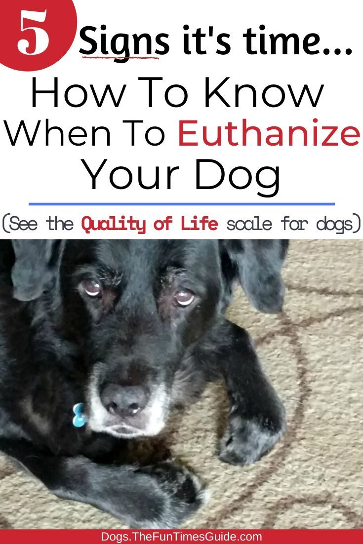 How do you know when its time to euthanize your dog my