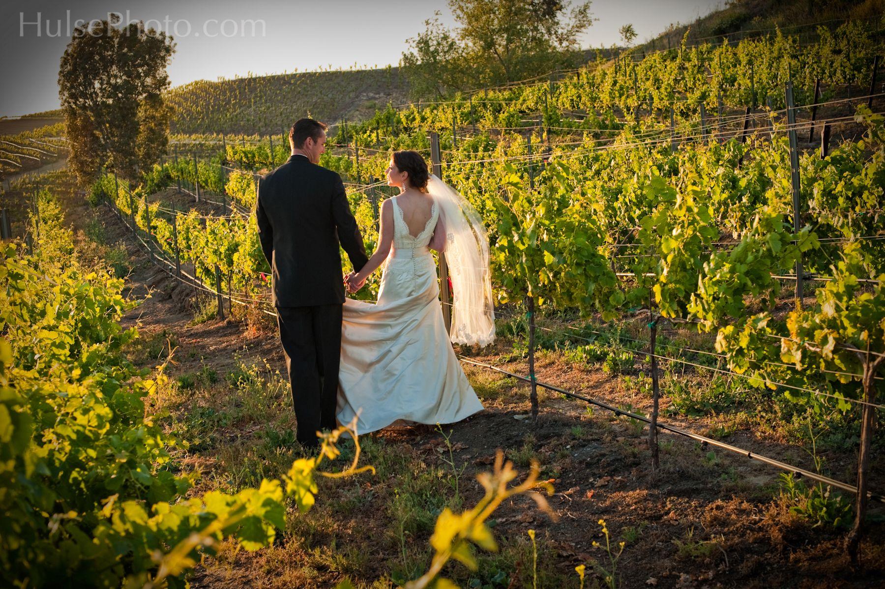 Beautiful vines in June/July Temecula weddings, Wine