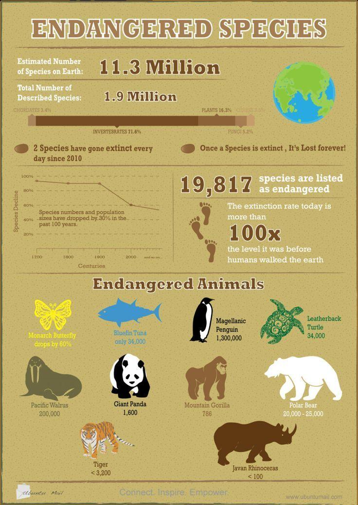 Endangered Species Infographic. infographic endangered