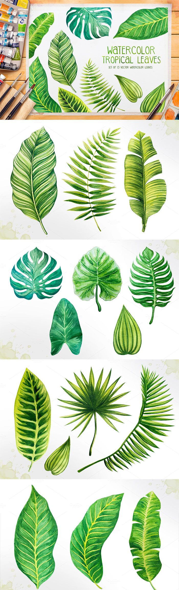 Set of 15 watercolor tropical leaves illustrations. Illustrations are drawn  by hand and vectorized. You can use it for making design projects, ...