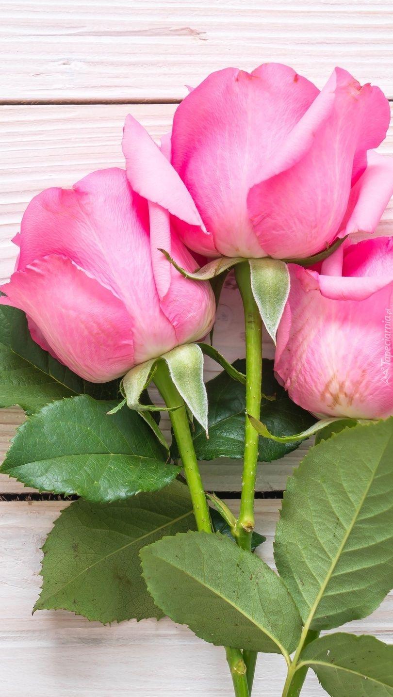 Tapeta Na Telefon Trzy Rozowe Roze Dodana Do Kategorii Roza Oraz Do Podkategorii Przyroda Kwiaty Dodana Przez Uzytkownika Violalidia2 Kto Love Rose Rose Pink