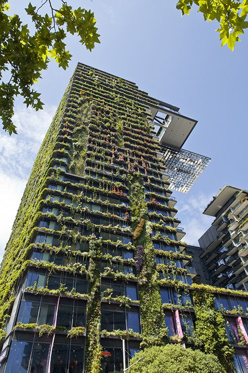 Our Fantastic Green Facade At One Central Park In Sydney 3 Years On Tensile Design Construct With Images Green Facade Green Building Architecture Green Building