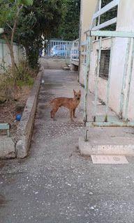 Βρεθηκε σε πυλωτη πολυκατοικιας στην Ανω Γλυφαδα αρσενικό σκυλάκι