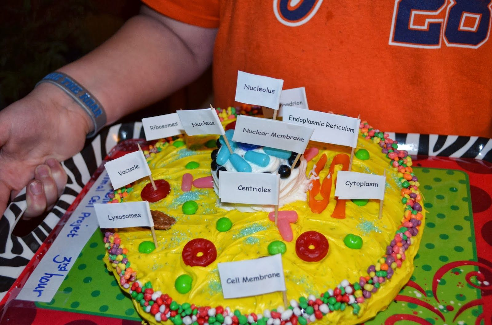 Another project JM and his animal cell YUM