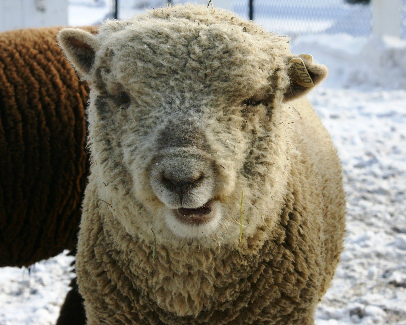 Image of: Down Syndrome Ramsheep Im Not Sure Which But Think Its Hungry Pinterest Down Syndrome Ramsheep Im Not Sure Which But Think Its Hungry