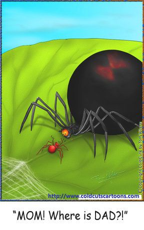 Coldcuts Cartoons Father S Day Baby Black Widow Spider