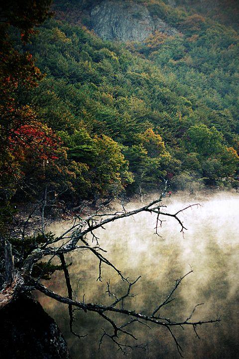"""#wet fog #Korea #주산지   """"Wet Fog"""""""