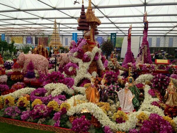 A Display Of Orchid Flowers From The Chelsea Flower Show Flower