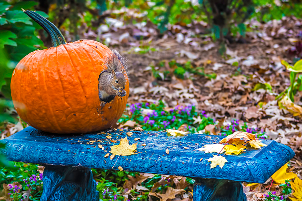 Joe Fabian of St. Clair Shores, Michigan, put this pumpkin on his front porch, but…