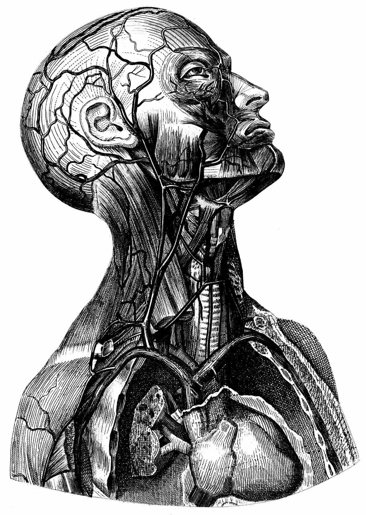 Skull Antique Medical Poster, Vintage Illustration