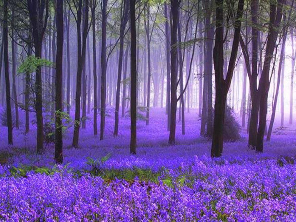 عشر طرق سهلة لتيسير خلفيات طبيعية ساحرة للموبايل خلفيات طبيعية ساحرة للموبايل Beautiful Nature Beautiful World Nature