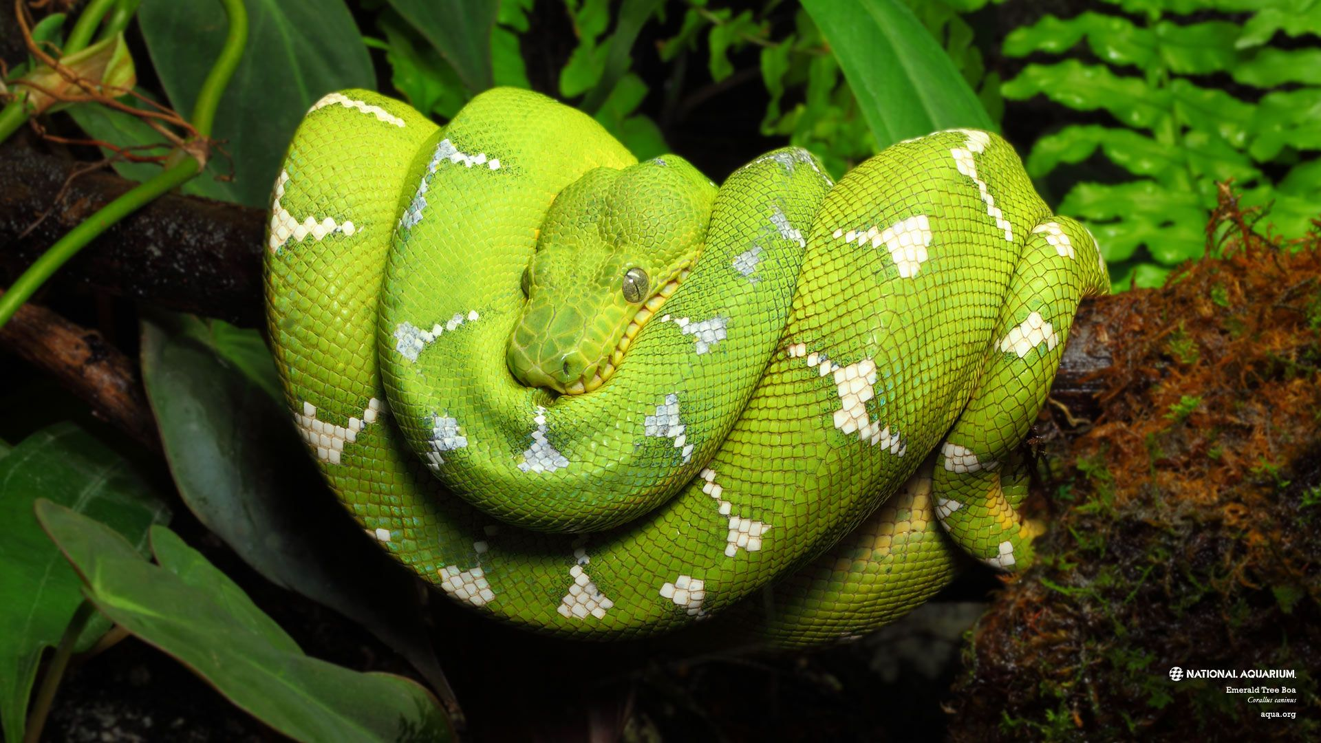 Boa Tree Snake Facebook Timeline Cover Facebook Covers - Timeline ...