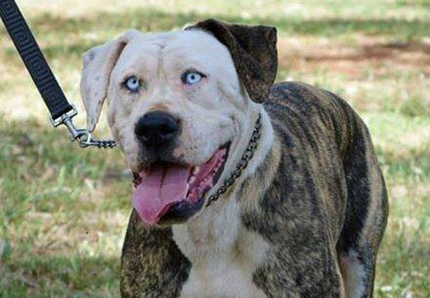 This Dog Looks Exactly Like John Travolta