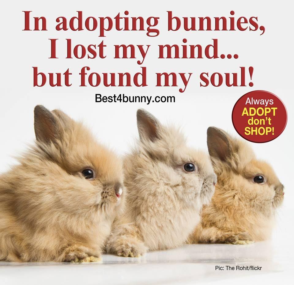 A4 Carteles Laminados Razas De Conejos Con Imagenes Razas De