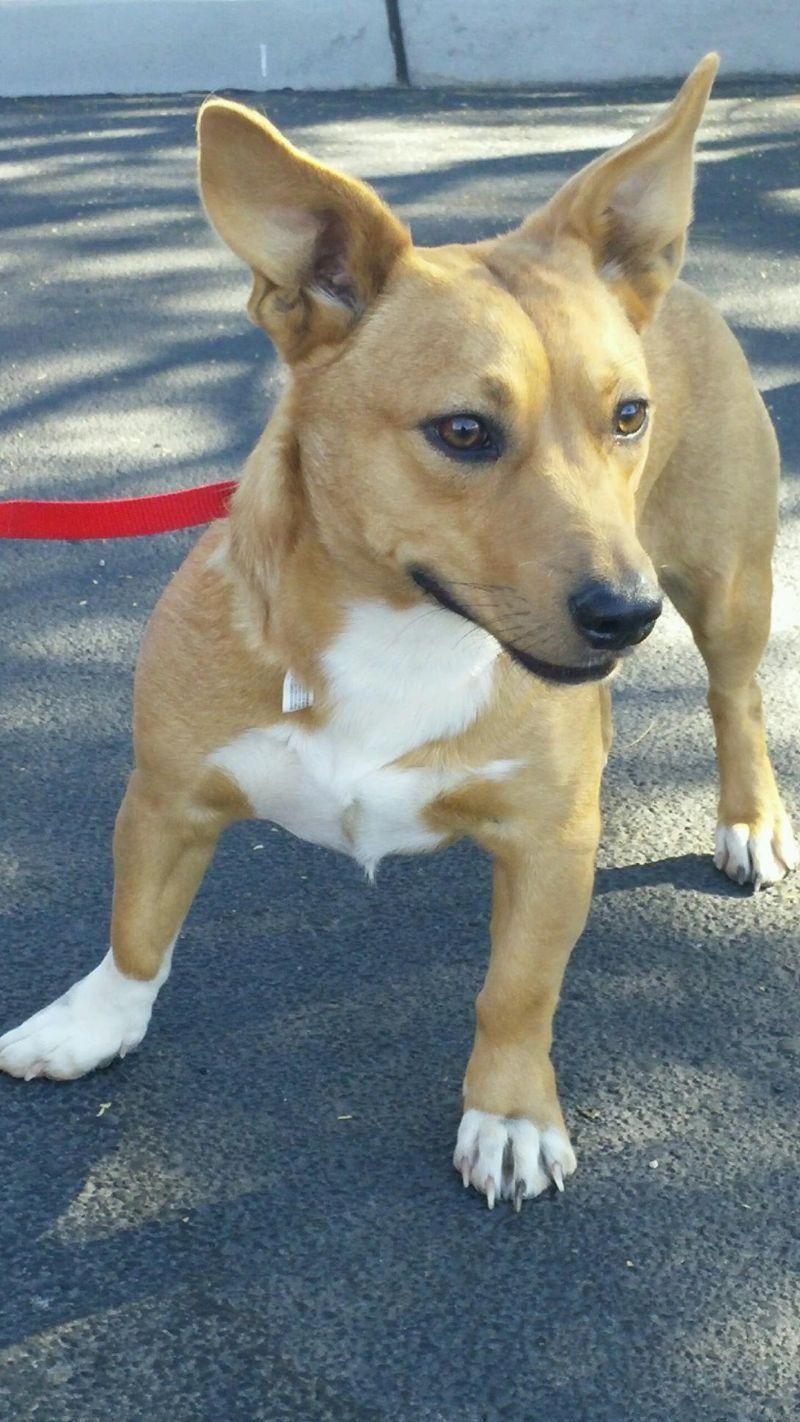 Puppy rescue chandler az