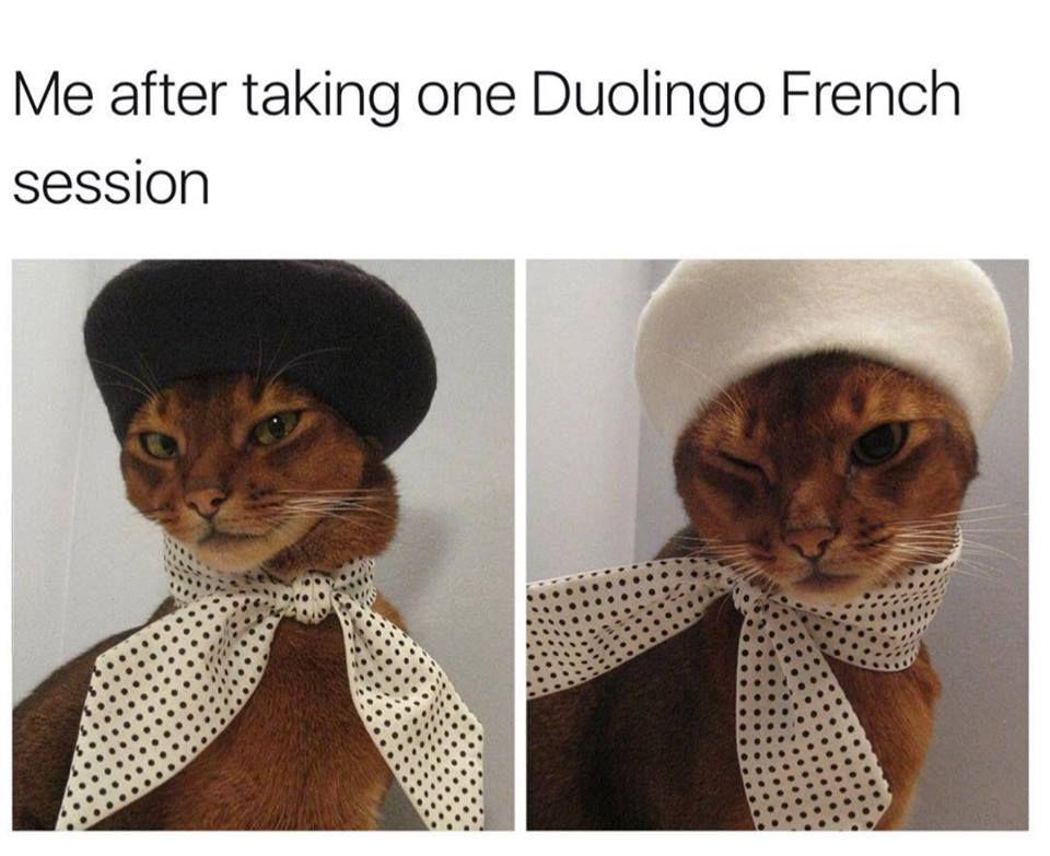 Pin By Yasmin On Funny Cat Memes Funny Cat Memes Funny Cats