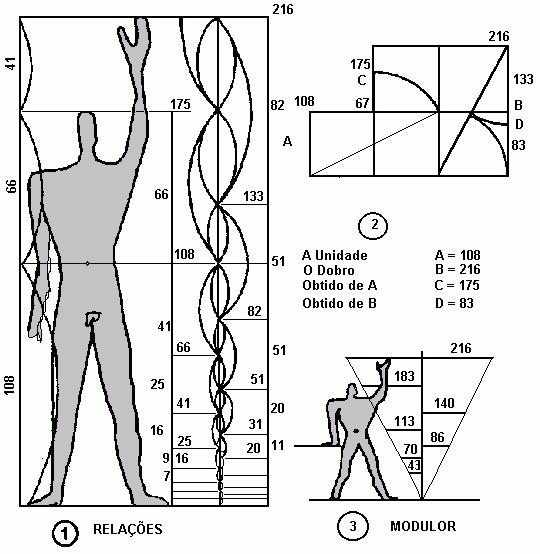 Golden ratio anatomy