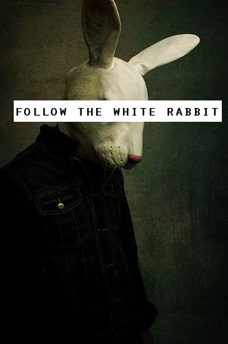 Follow the White Rabbit                                                                                                                                                                                 More