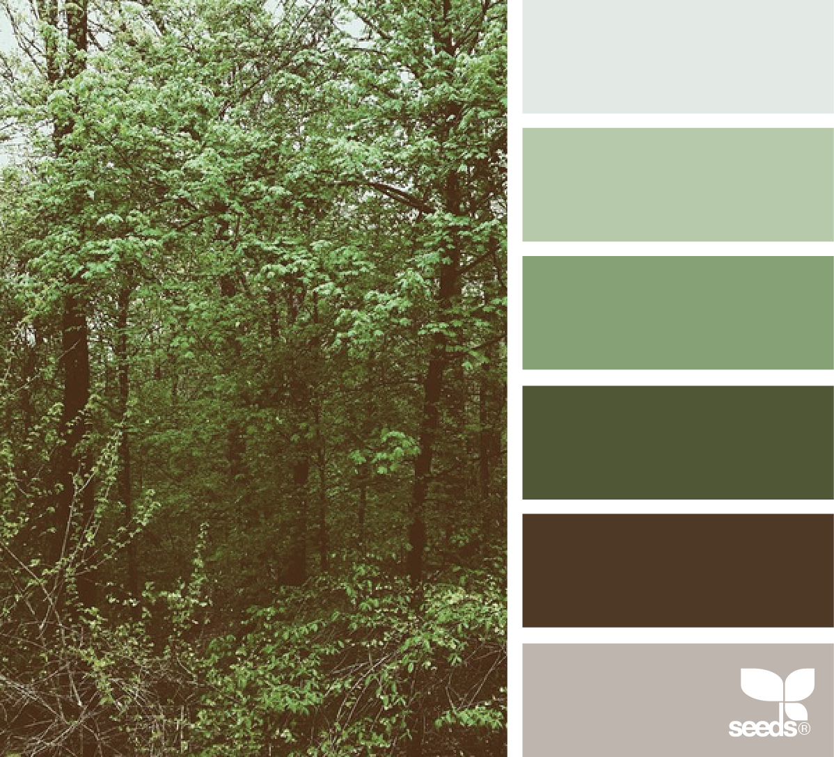 Brown Color Schemes, Green Color Schemes