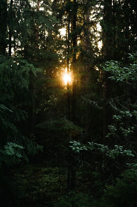 Light. Daniel Gebhart de Koekkoek.