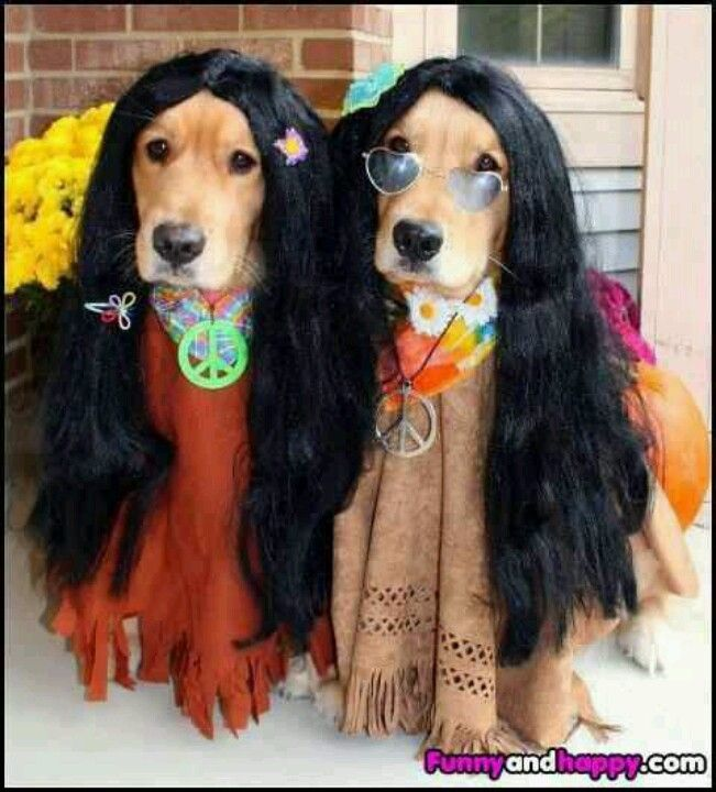 Funny and happy hippies Pinterest Doggies, Animal and Dog