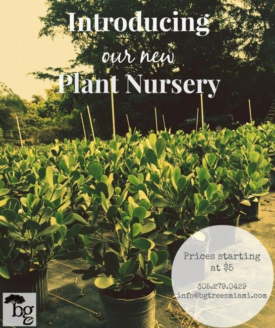 How To Grow Clusia Plants In The South