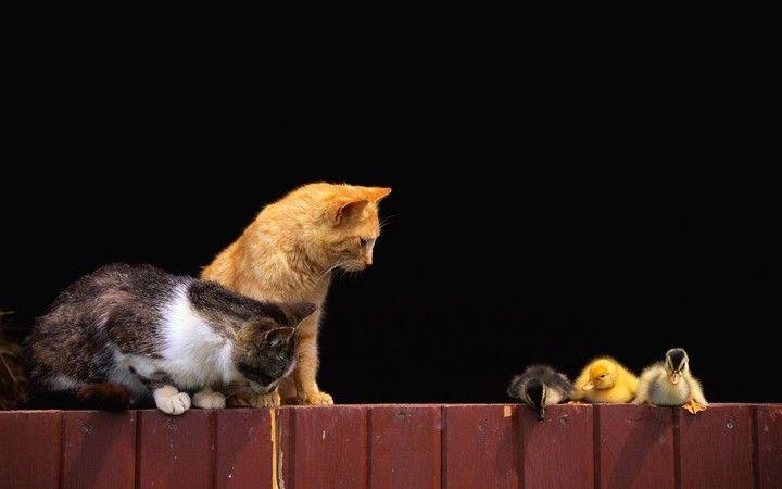 Cat Cute Dusk, animal funny backgroun