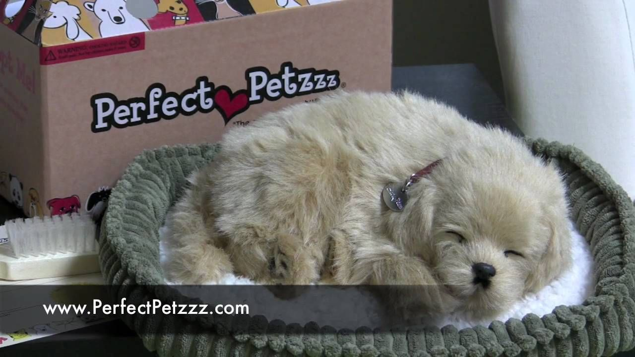 Perfect Petzzz Are Stuffed Animals That Breathe It Is All The