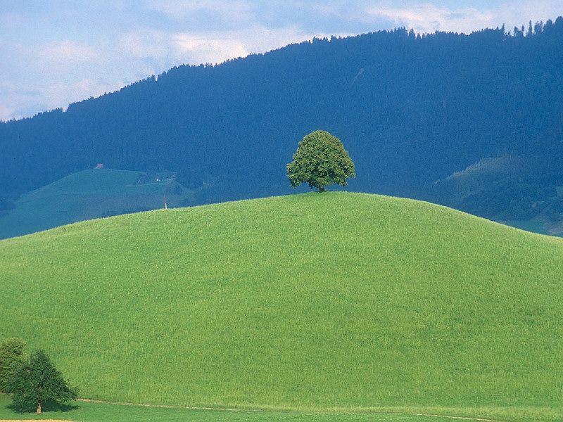 IL FOTOGRAFO AREZZO  via Monte Falco 12 FINALMENTE PRIMAVERA www.ilfotografoarezzo.it