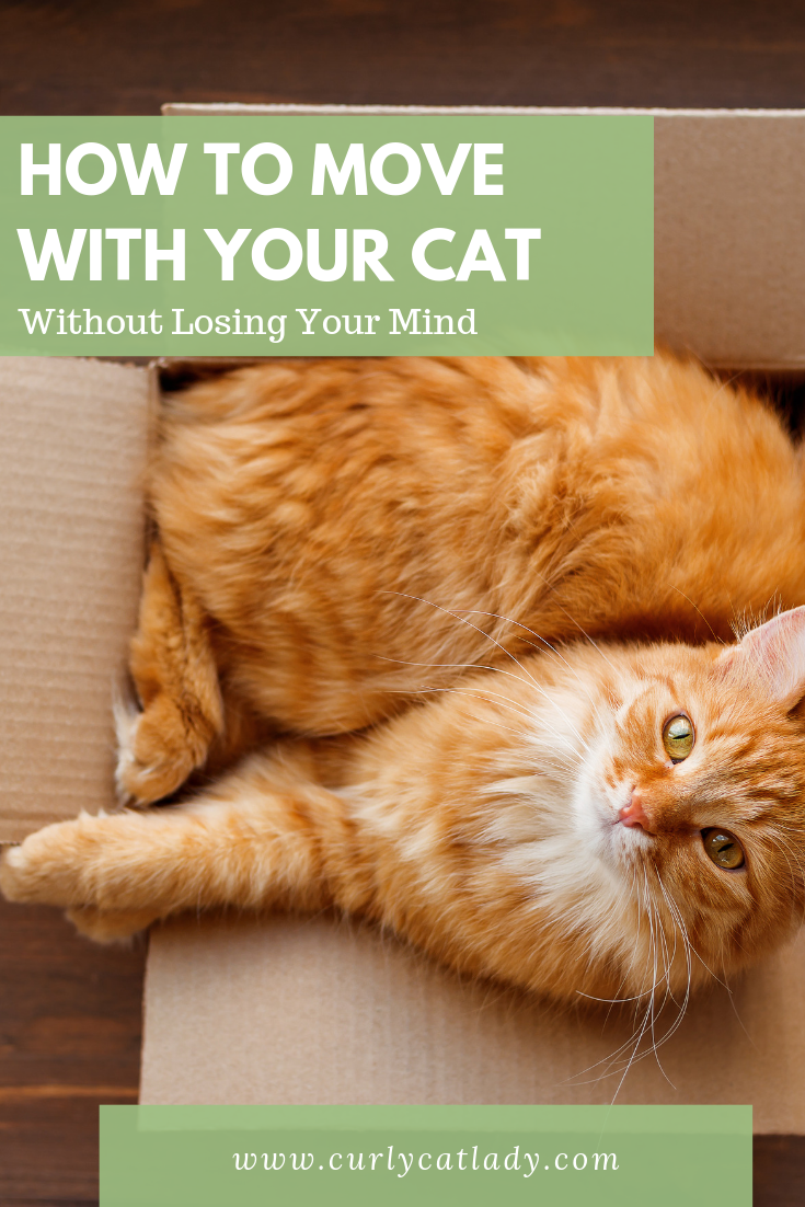 Moving With Cats Long Distance Cats Cat Training Cat Travel