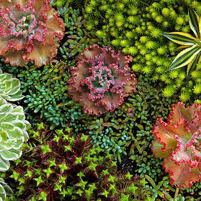 how to create succulent garden