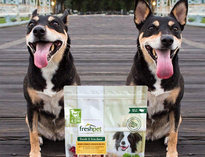 Freshpet all natural dog food in 2020 all natural dog