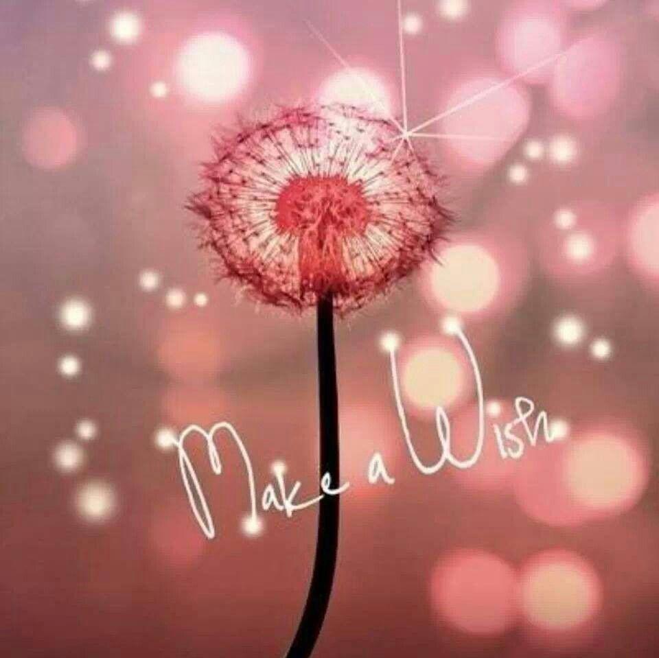 Funny Birthday Wishes Pink: Buon Compleanno Silvia....Make A Wish! Xxx Cristina