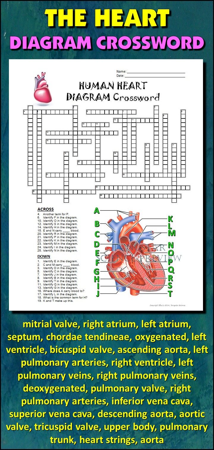 Heart Crossword With Diagram Editable Student Learning Diagram