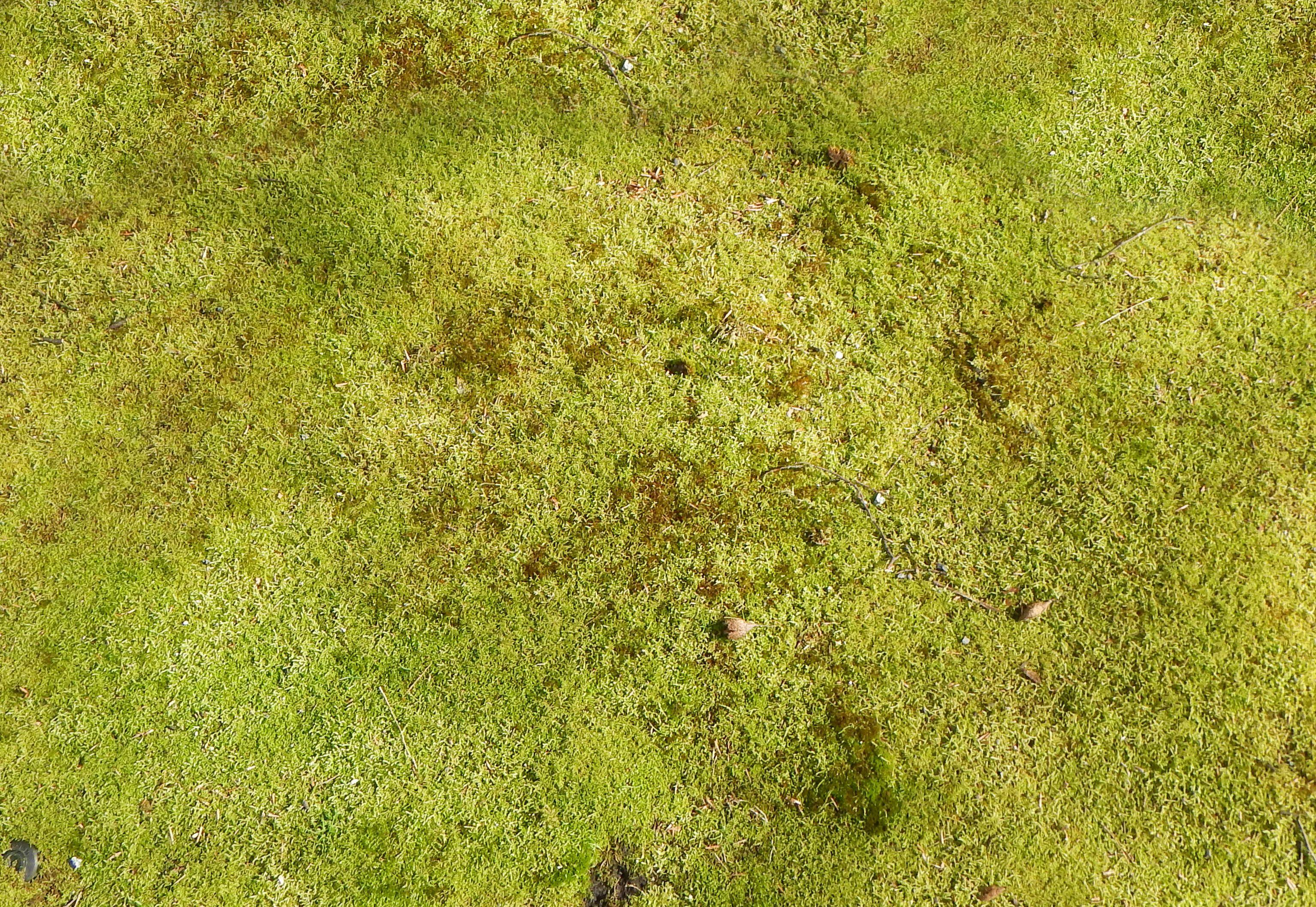 tall grass texture seamless. Grasses Tall Grass Texture Seamless