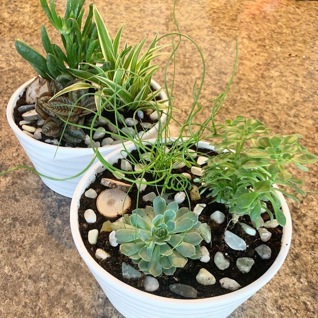 Mon Petit Jardin Proundofme Gardenparty Plantstyle Plants