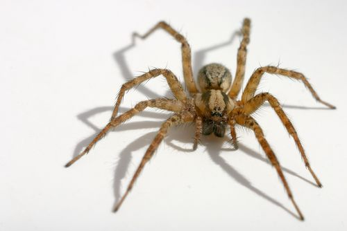 FREE USA Spider Identification Chart - http://www.guide2free.com/home-and-garden/free-usa-spider-identification-chart/