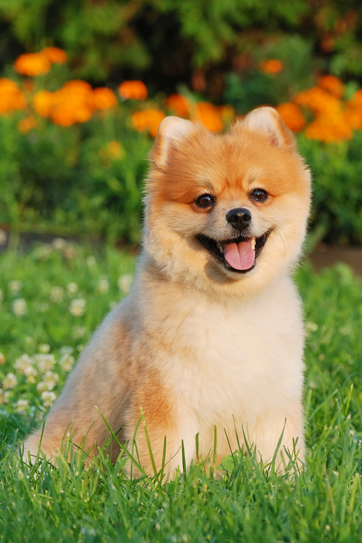 A Pet Prescription Plan For The Best Pet Care Online Cute Cats And Dogs Pets Animals Beautiful