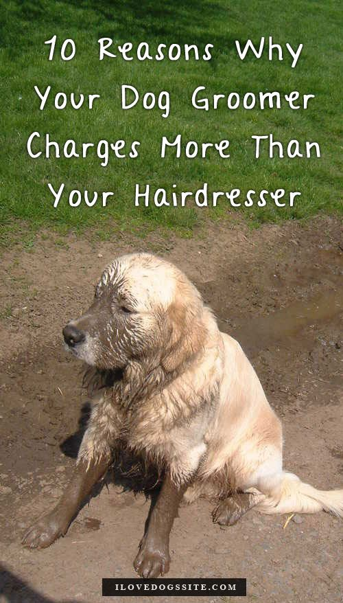 10 Reasons Why Your Dog Groomer Charges More Than Your Hairdresser Dog Groomers Dog Grooming Dog Grooming Tips