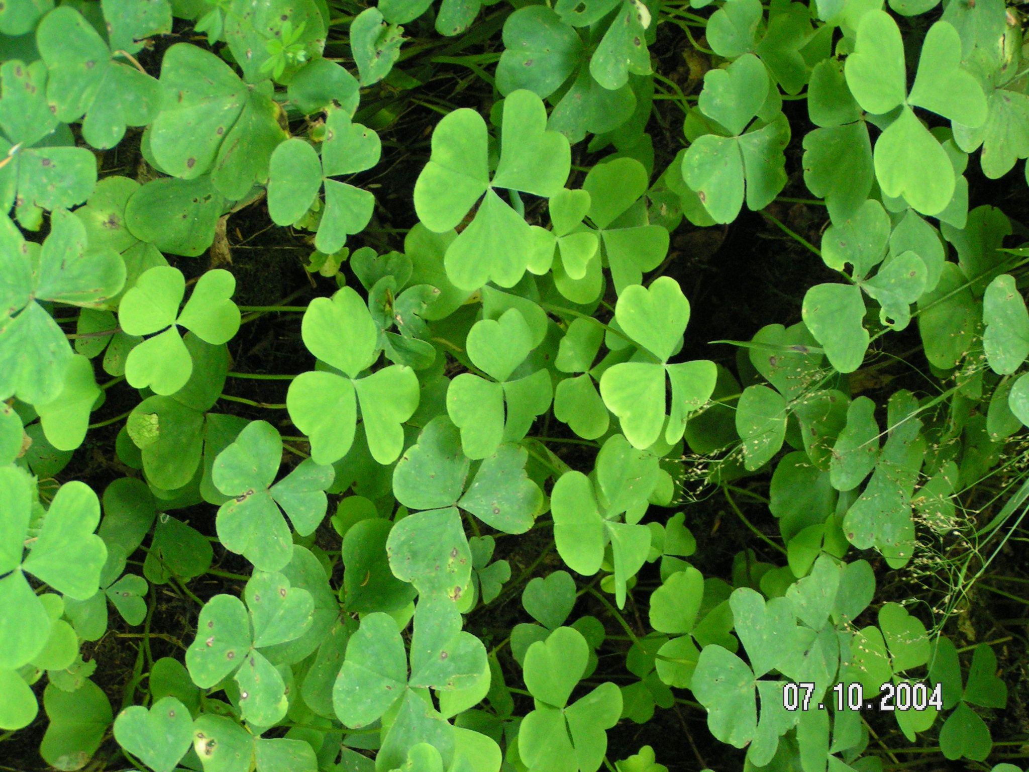 Happy St. Patrick's Day! Erin go bragh, Day, Patrick