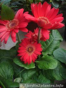 que faire au jardin en juin quoi planter en juin classeur jardin pinterest en t juin. Black Bedroom Furniture Sets. Home Design Ideas