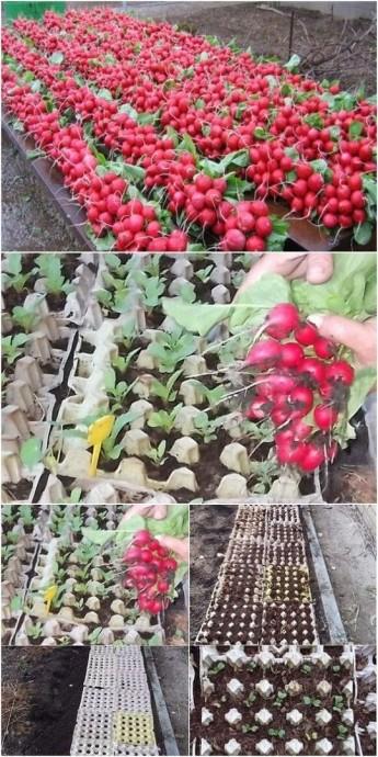 Применение яичных лотков в садоводстве
